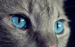 Sin acaros en los gatos