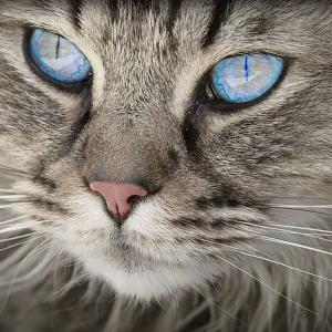 Alergia a los gatos -síntomas y remedios